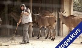 TierpflegerInnen VB-Kurs für AOLAP