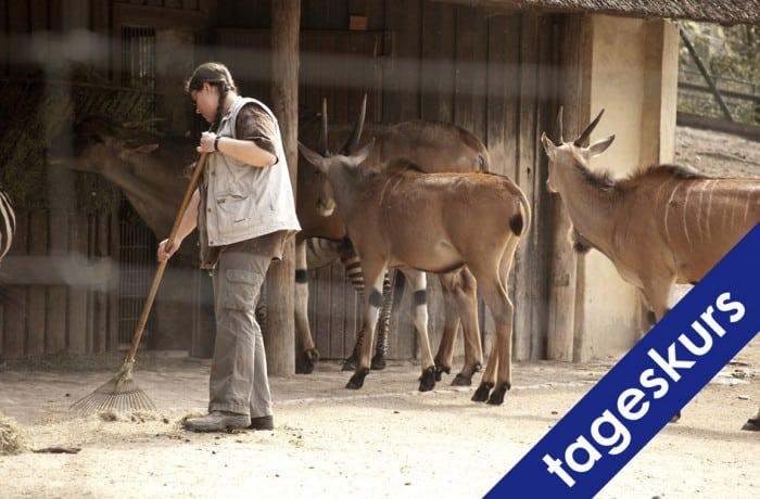INFOTAG TierpflegerInnen